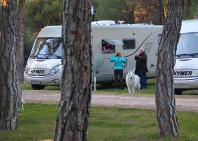 camping-riberduero-penafiel10