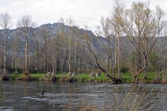 camping-rio-luna-piscina_merendero2
