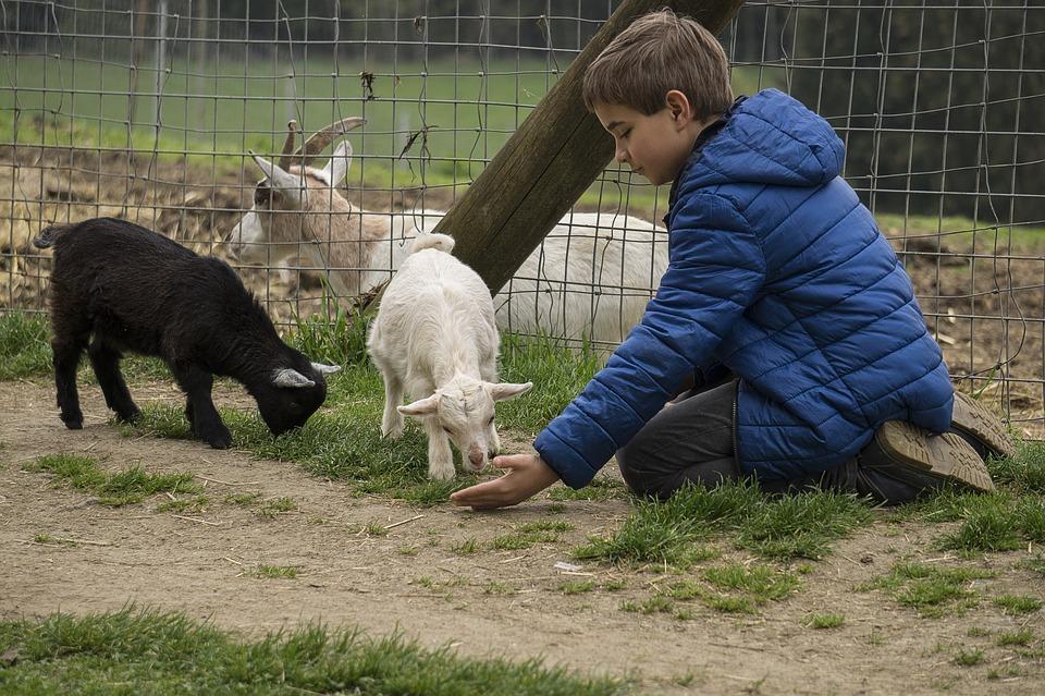 Niño en el zoo