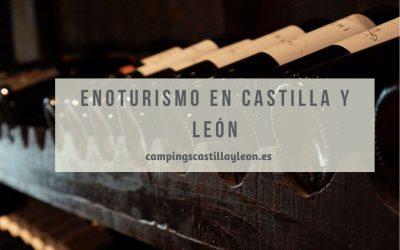 Ruta del vino: 3 planes de enoturismo en Castilla y León